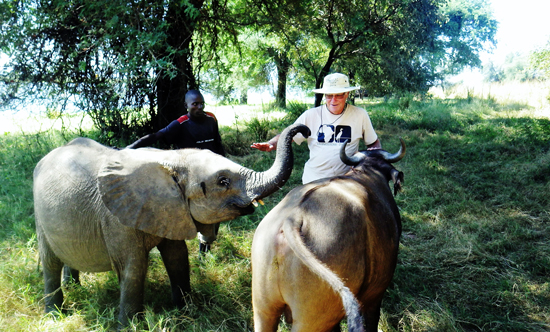 elephant orphans in Mozambique with David Lemon